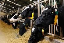 Od nového roku se zvýší bezpečnost potravin. Ilustrační foto.