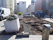 Zakládání nových záhonů v centru Ústí