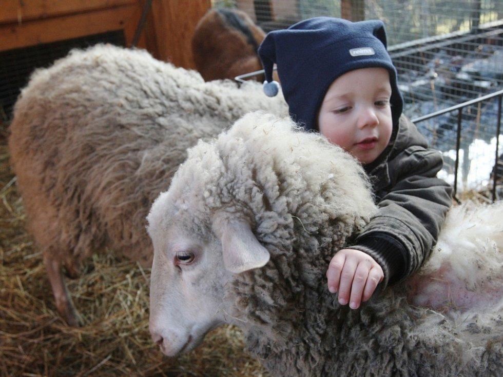 Na farmě poblíž Vaňovského vodopádu tráví děti z lesní třídy dva dny v týdnu. Venku jsou však téměř pořád. Na snímku malý Kubík.