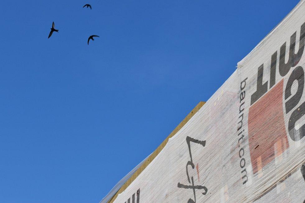 Ptáci nad školkou hledají přístup do hnízd