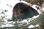 Ústecká zoo v zimě. Iustrační foto.