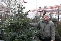Vánoční stromky jsou v prodeji. Výběr je bohatý.