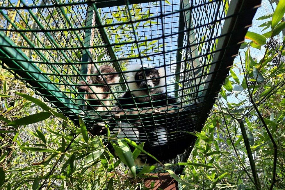 Vari černobílý s mládětem v ústecké zoo
