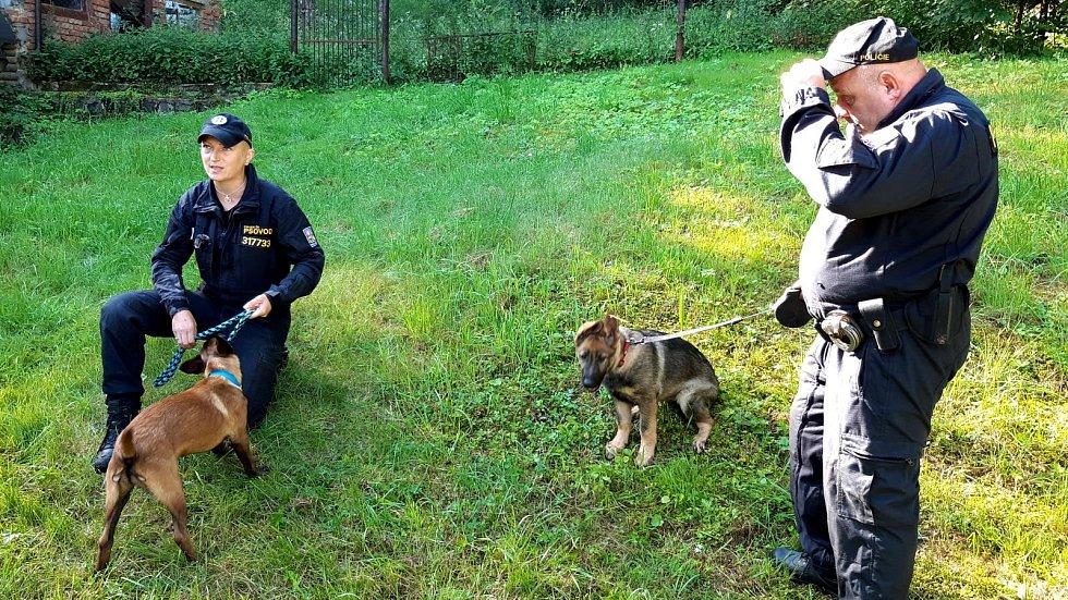 Policisté cvičí dvě štěňata do týmu služebních psů