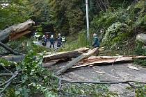Pád stromu v Telnici