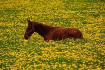 Kdo má rád koně, neměl by si nechat ujít v sobotu vytrvalostní závod kolem Slavošova.