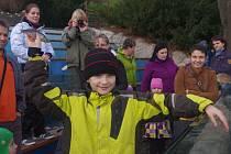 Mezinárodní den tuleňů, lachtanů a velryb v ústecké zoo.