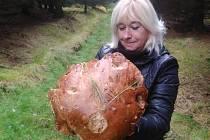 Obří hřib o průměru 26 centimetrů, s váhou 1,80 kilogramu našla Ústečanka Zlatka Chromá na Šluknovsku.