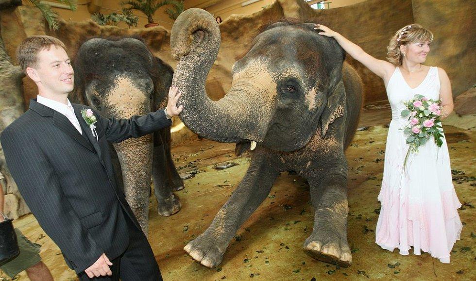 V těsné blízkosti slonic se uskutečnila v ústecké zoologické zahradě unikátní svatba.