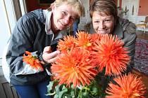 Zámek Velké Březno se zahalil do květů. Na snímku Jiřina Hlavičková a Jiřina Myšková.