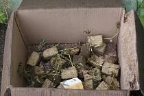 Nelegální pěstírna v Tisé na Ústecku. Zbytek sazenic marihuany, která neshořela. Sazenice jsou v izolační vatě, které držela vlhkost. Na půdě domu jich bylo několit stovek.