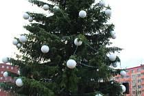 Smrk omorika pochází ze soukromé zahrady v Pohořelicích. Nemohl tam už zůstat kvůli své velikosti, a tak se stal ještě alespoň na několik týdnů ozdobou města. Měří zhruba dvanáct metrů.