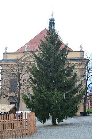 Masarykovo náměstí vUherském Brodě zdobí asi desetimetrový smrk ztepilý. Město dostalo téměř třicetiletý strom darem zareálu někdejšího podniku Lidová tvorba.