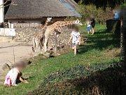 Do zoo přicházejí i návštěvníci, kteří nerespektují pokyny zahrady.