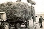 HALENKOVICE, ŽNĚ. Fotka pochází ze sběru slámy po žních na polích v Halenkovicích z roku 1971. Tehdy slámu ještě nabírali na vlečku traktoru samotní lidé, dnes je už dávno vystřídala nová zemědělská technika, která tu práci za ně dělá.