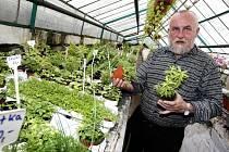Zahradník Stanislav Sehnálek ve skleníku ve Zlíně.