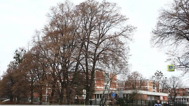 Vzrostlé stromy podél potoku Januštice.