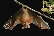 Přijďte do muzea za netopýry