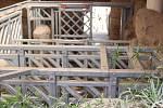 Již za dva měsíce má přijít na svět v Zoo Zlín mládě slona afrického.