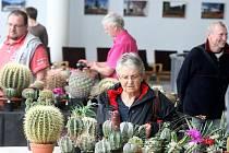 Výstava kaktusů v Městském divadle ve Zlíně.