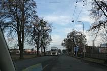 Alej stromů v Malenovicích