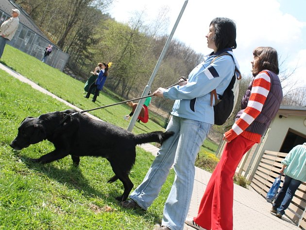 Ve zlínském Útulku pro zvířata v nouzi se v sobotu 21. dubna 2012 konalo Útulkové jaro. Více než stovka lidí vyrazila s přidělenými psy na procházku po okolí.