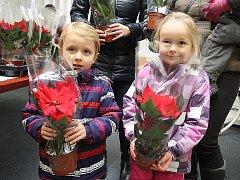 Vánoční růže. Ilustrační foto