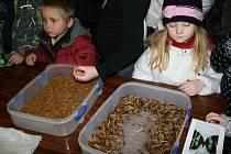 49. Mezinárodní entomologická výstava a výměnné dny v otrokovické Besedě.