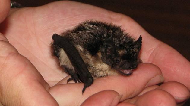 STÁLÍ HOSTÉ. Kolonie netopýrů se na barokní zámek vracejí už více než půl století.