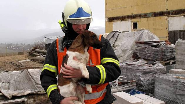 Úsměvné zásahy mají za sebou také hasiči. Dodnes vzpomínají i na případ psa, který uvízl v betonovém sloupu. Roční norník se totiž zaběhnul svému pánovi do areálu firmy a rovnou si to namířil do betonového sloupu. Jenomže pak už nemohl tam a ani zpět.