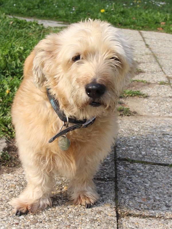 Ani další psi v případě položení otrávených návnad nejsou v bezpečí. Stejně jako Chester.