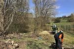 Čištění náletových dřevin