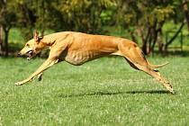 Za nalezení psa nabízí tisíc eur