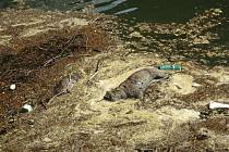 V potoku plavaly mršiny zvířat