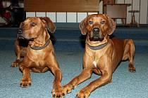 Tanec se psy v obřadní síni otrokovické radnice.