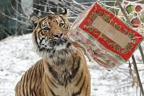 Vánoce v zoo. Ilustrační foto