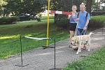 Vyšší překážky byly náročný oříšek pro většinu psů