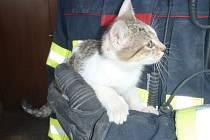 Kotě za hromadou dřeva zachránili hasiči.