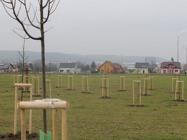 Pracovníci Technických služeb Otrokovice v těchto dnech pracují na výsadbě 230 stromů z celkových pěti set.