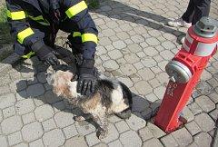 Záchrana psa pomocí klobásky