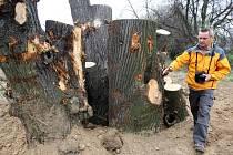 HMYZÍ HOTEL z pařezů a kmenů stromů poskytne útočiště drobným živočichům a poučení dětem.