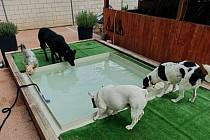 Ve psím hotelu je hostům k dispozici také bazének.