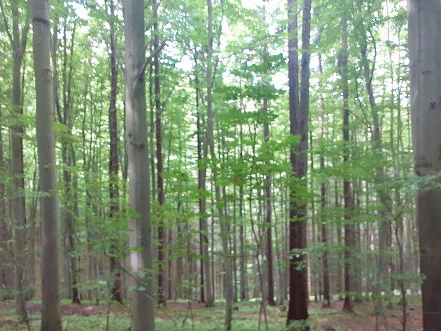 Lesy vokolí rozhledny Lopeník na Uherskohradišťsku.