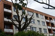 Policisté z obvodního oddělení ve Zlíně podezřívají z poškození cizí věci šedesátiletého muže ze Zlína, který bez povolení ořezal obecní strom na sídlišti Jižní Svahy. Způsobil tím škodu ve výši téměř 35 tisíc korun.