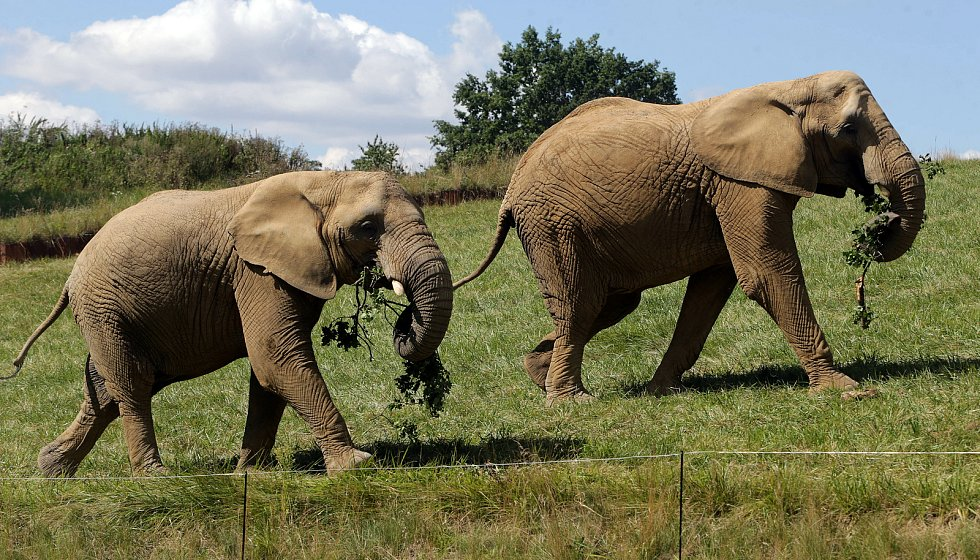 Nový výběh pro slony Karibuni ve zlínské zoo