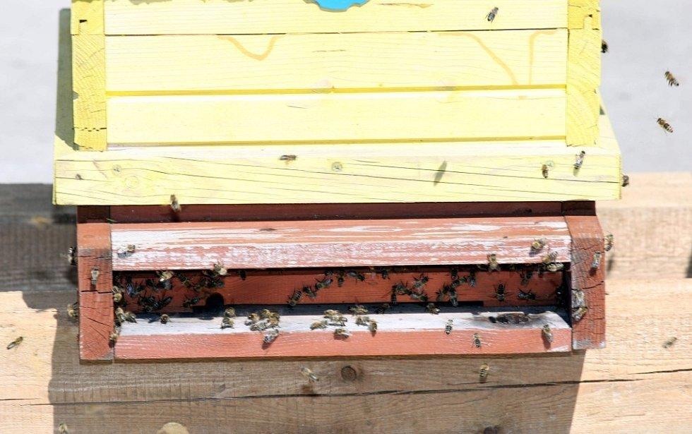 Instalace včelích úlů na střechu budovy fakulty technologické ve Zlíně.