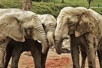 Společně to zvládneme, zní vzkaz z uzavřené zoo Zlín