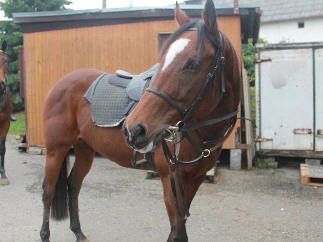 Dostihová dráha Slušovice, stáje ve Slušovicích, koně a dostihy.