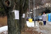 Kácení stromů na ulici Družstevní na Jižních svazích ve Zlíně.