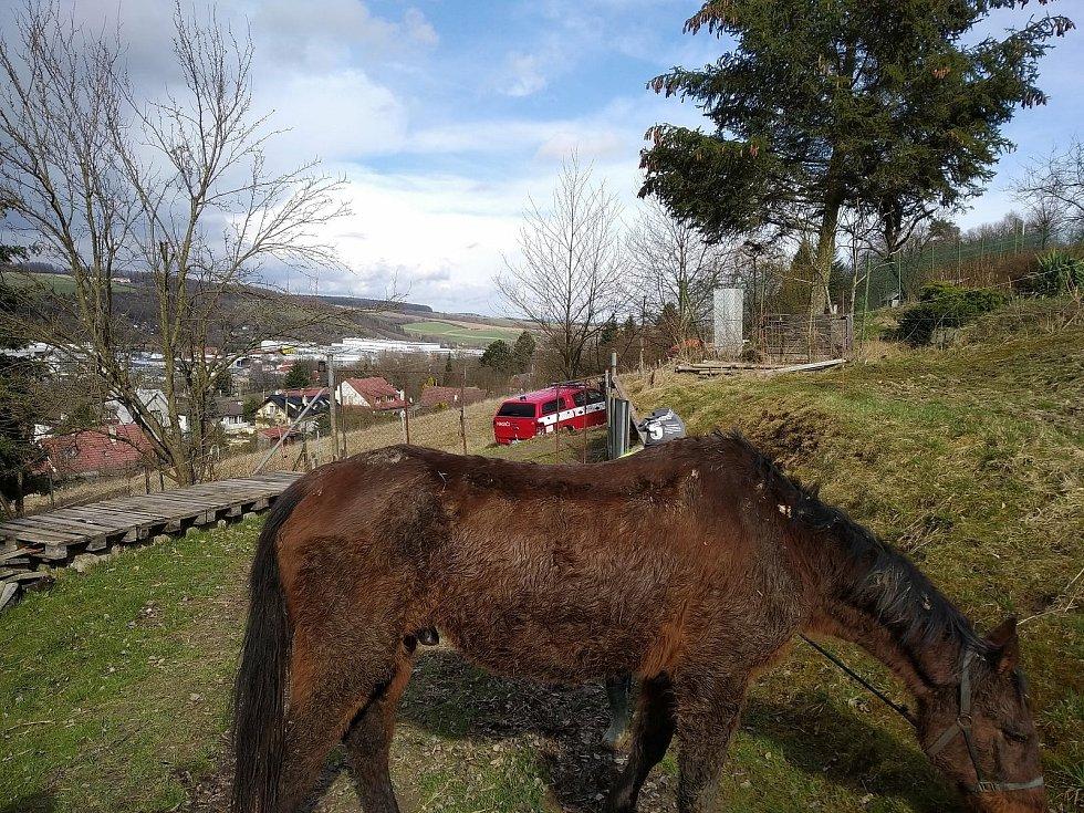 Záchrana koně uvízlého v blátě ve Zlíně Přílukách.